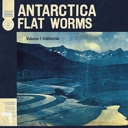 Flat Worms: Antarctica (God#018)